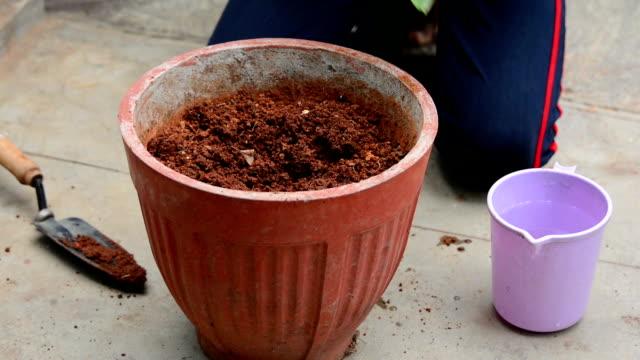 Het planten van een kleine Plant In de Pot
