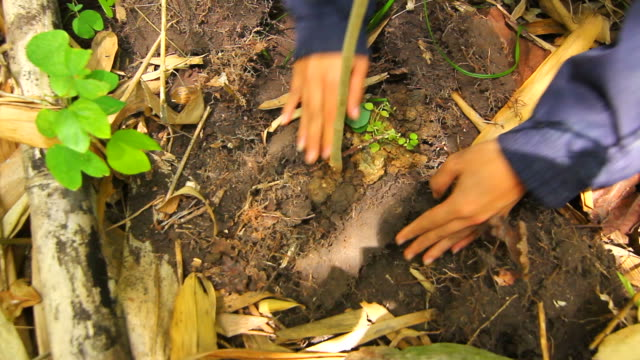 Planting a tree forest