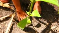 Piantare un albero nella foresta