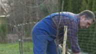 HD: Planting A Tree