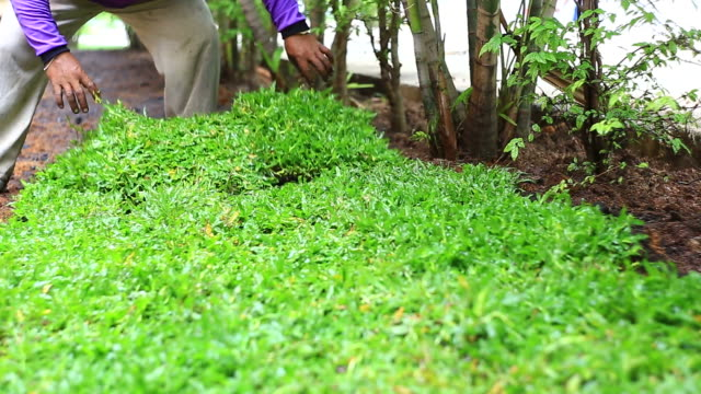 Neue sod Gras Pflanzen