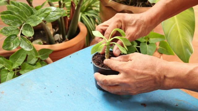 Planting young plant.