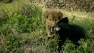 Playful cute stray puppies in grass.