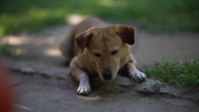 Lekfull hund