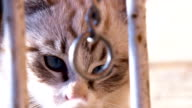 CU ZO Playful Kitten