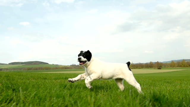 Playful puppy running in grass