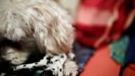 Playfull niedlichen kleinen Hund POV