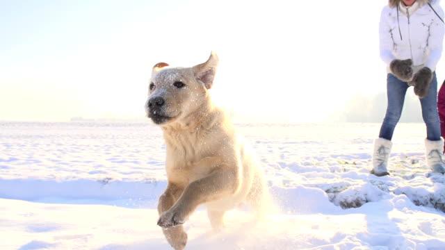 SLO MO spielt mit einem Hund im Schnee