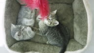 Playing with Feather Toy