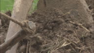 Ploughshare cuts through soil in paddy field, Qinling, China.