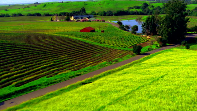 AERIAL point of view farmland with rows of crops, farm buildings + hills / Napa Valley, California