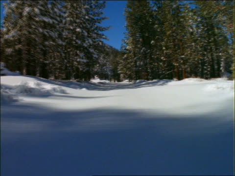 point of view thru snow and pine trees