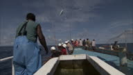 Pole fishermen catch and fling skipjack tuna (Katsuwonus pelamis) onboard, Solomon Islands