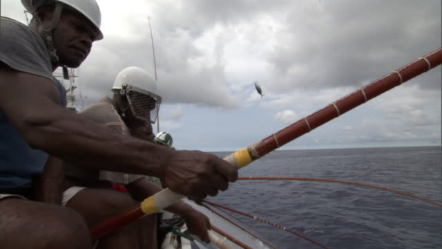 Pole fishermen catch and fling skipjack tuna (Katsuwonus pelamis) onboard, Solomon Islands