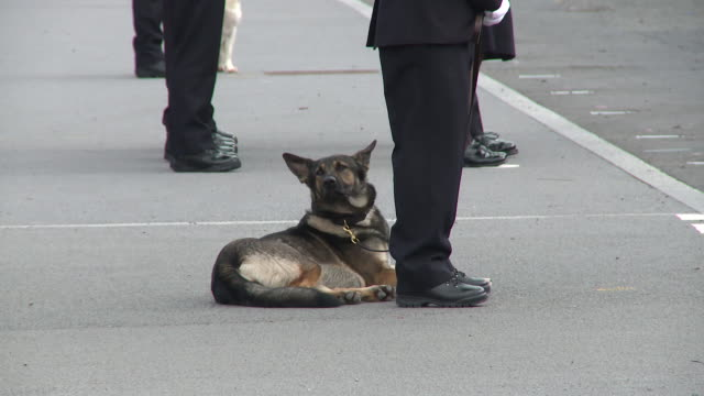 Police dog at Hendon Police College on October 27 2017 in London England