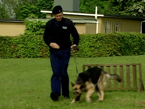 Police handlers train dogs to go over various jumps at a training centre London 2000
