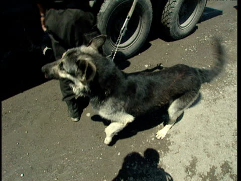 Policeman and sniffer dog search in and around lorry for drugs Tajikistan
