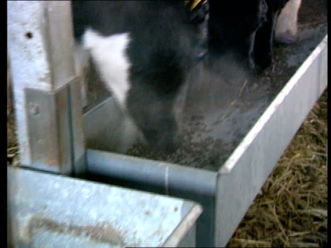 Freedom of Information Bill Government Concessions LIB Cows feeding from trough TRACK LIB CMS Piece of beef being cut up