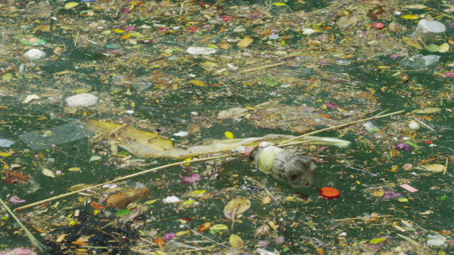 MS Polluted water / St. Georges, Grenada, Caribbean
