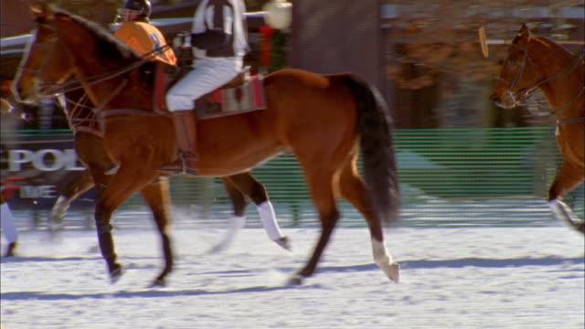 MS Polo on snow / Aspen, Colorado, USA