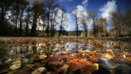 Pond reflecting trees with Autumn color