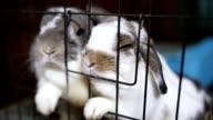 Scarsa conigli in gabbia.