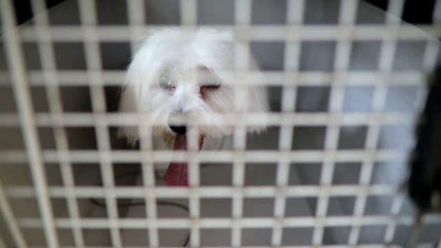 Eine arme weiße Hund in seinem winzigen Metall-Käfig