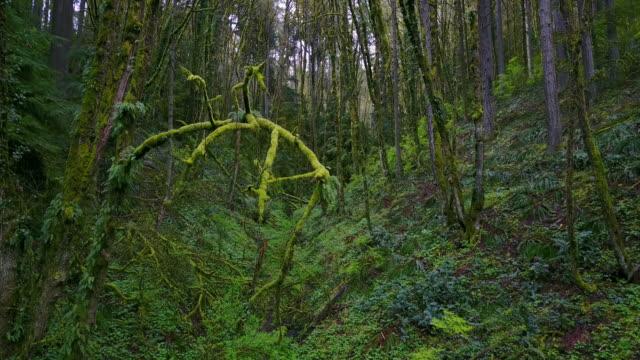 Portland Forest Park