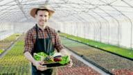 SLO MO DS Porträt eines Bauern mit Kiste voll mit Gemüse im Gewächshaus
