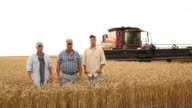 WS DS Portrait of Farmer and Adult Sons in Wheat Field with Large Combine / Oyster, Virginia, USA