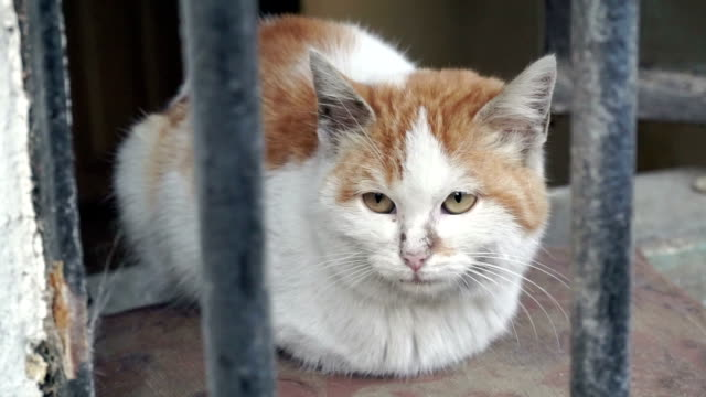 HD: Portrait of head of street cat behind cage