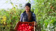 MS Portrait of smiling organic female farmer holding box of freshly harvested tomatoes in greenhouse