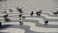 Portugal Lisboa pombo