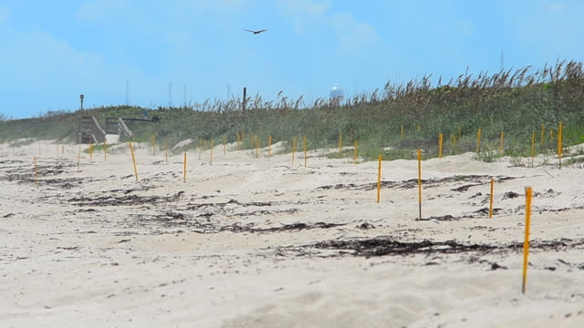 Posts marking turtle nests on beach with heat haze effect