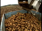 MCU Potatoes falling from harvester conveyer belt into container