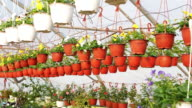 Potted flowers in plant nursery