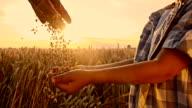 SLO MO Pouring corn maize into boy's hand