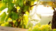 HD SUPER SLOW-MOTION: Versare il vino In un vigneto