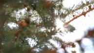 Powerful sunshine through canopy