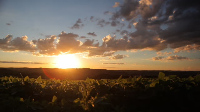 pôr do sol em lavoura de soja