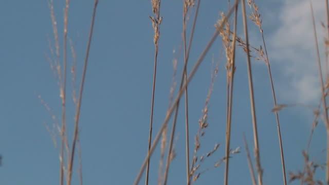 Prairie 019 1080p30