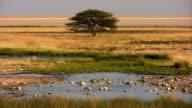 Prairie acacia waterhole