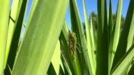 Praying mantis & reproduction