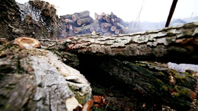 Preparation of firewood