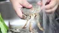 PreparingCrab