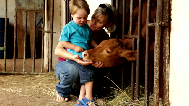 Pre-school toddler and mother looking at calf in farmyard