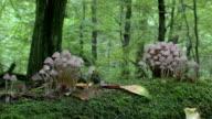 Primeval Forest mushrooms