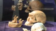 Primitive hominids may have lived in Africa at the same time as humans researchers say in new findings that could change the understanding of human...