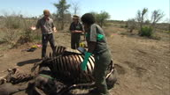 Prince Harry shown the horrors of rhino poaching at Kruger National Park Shows exterior shots Prince Harry looking over rhino carcass with park...