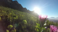 Protea Flower against a blue sky